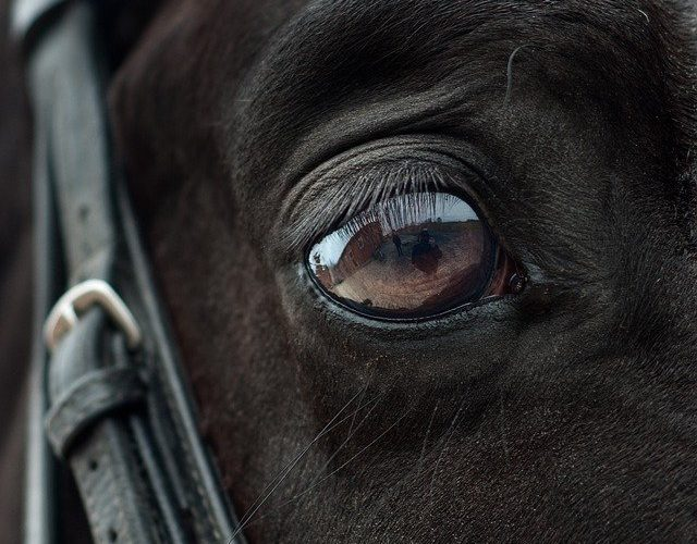 spenden pferde herpes valencia